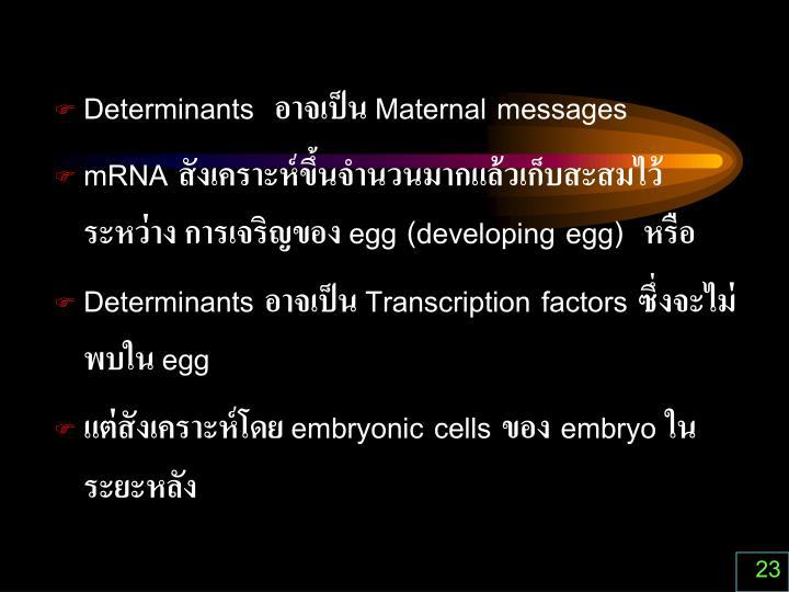 Determinants  อาจเป็น Maternal messages