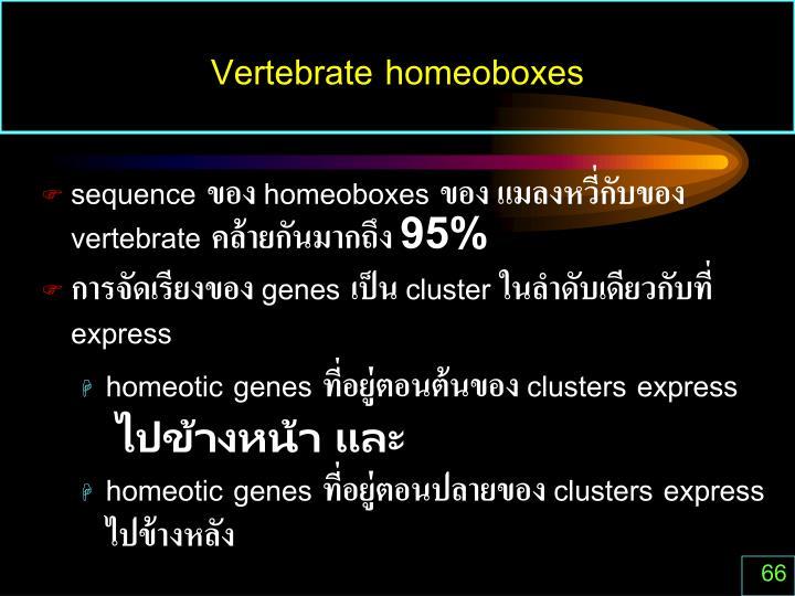 Vertebrate homeoboxes