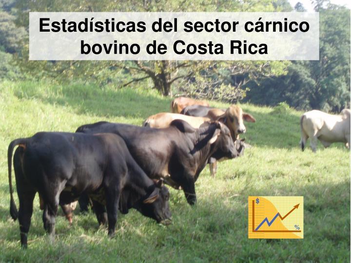 Estadísticas del sector cárnico bovino de Costa Rica