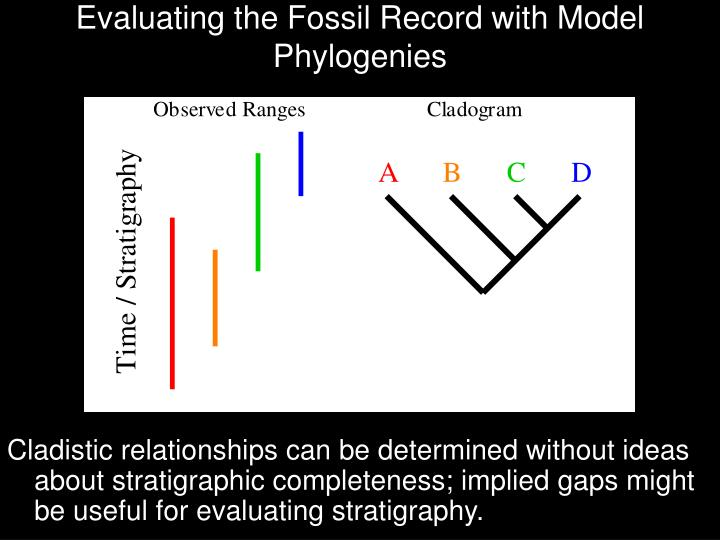 evaluating the fossil record with model phylogenies n.