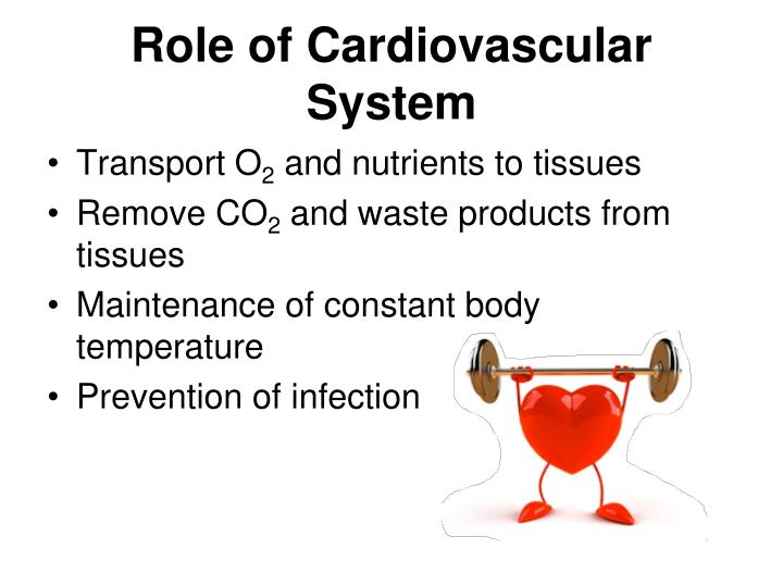 Role of Cardiovascular System
