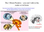 the 3 brain paradox you can t talk to the snake or rat brain