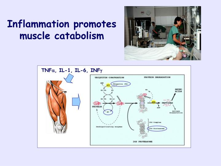 Inflammation promotes muscle catabolism