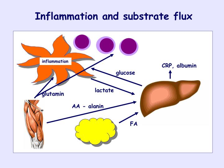 Inflammation and substrate flux