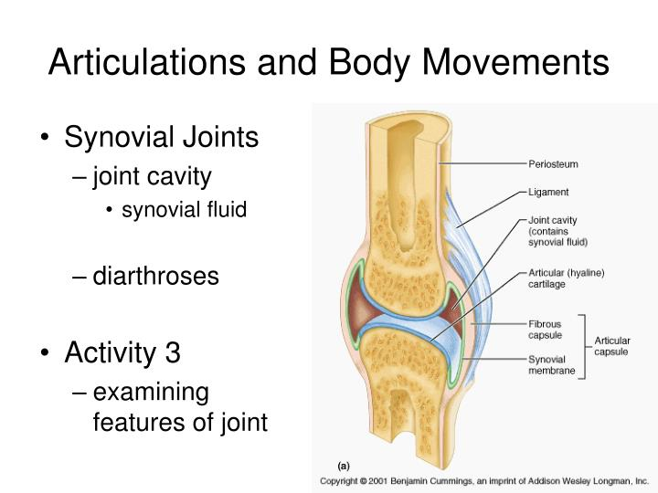 joints and body movement Joints hold the skeleton together and support movement there are two ways to  categorize joints the first is by joint function, also referred to as range of motion.