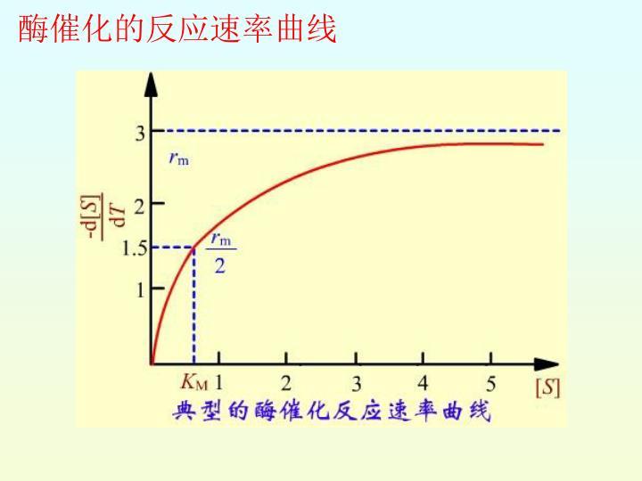 酶催化的反应速率曲线