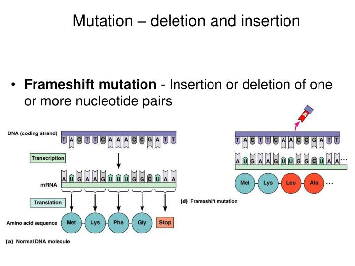 Mutation – deletion and insertion