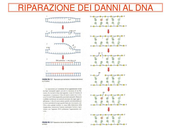 RIPARAZIONE DEI DANNI AL DNA
