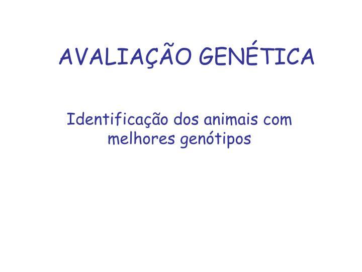 AVALIAÇÃO GENÉTICA