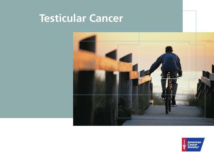 Ppt testicular cancer powerpoint presentation id6069524 testicular cancer toneelgroepblik Images