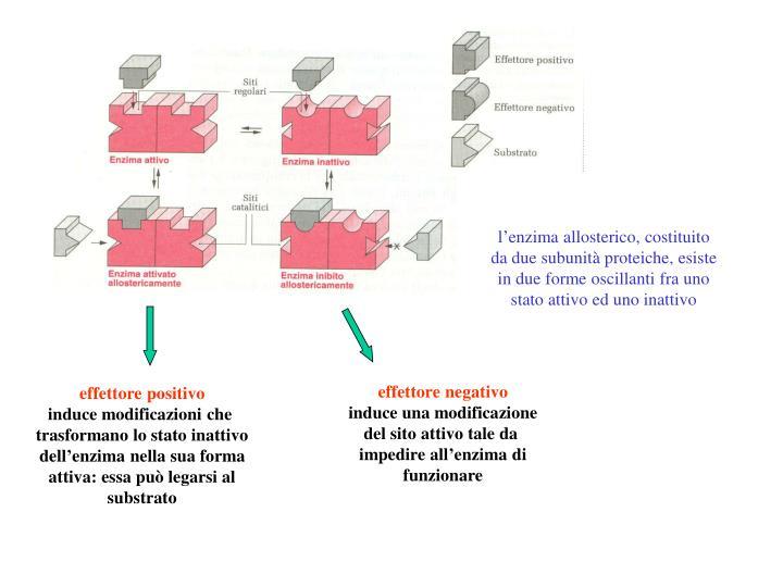 l'enzima allosterico, costituito
