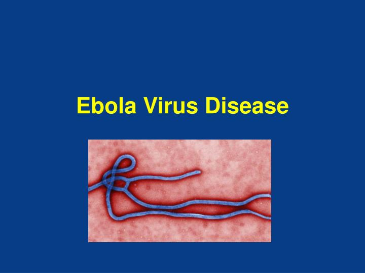 the deadly ebola hemorrhagic fever The deadly ebola virus has been (that's why responders in this outbreak are referring to ebola virus disease rather than ebola hemorrhagic fever.