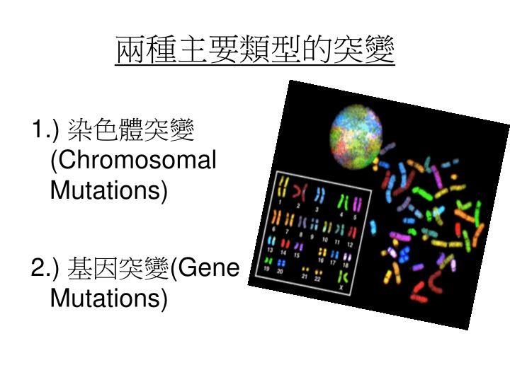 兩種主要類型的突變