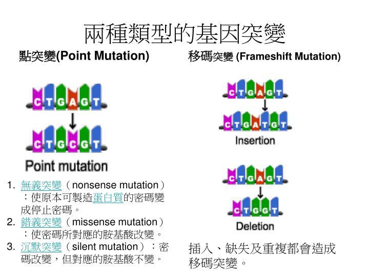 兩種類型的基因突變