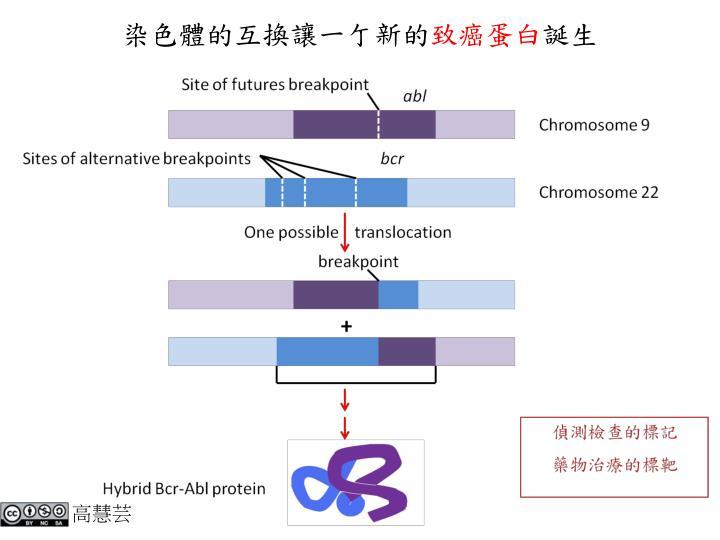 染色體的互換讓一亇新的