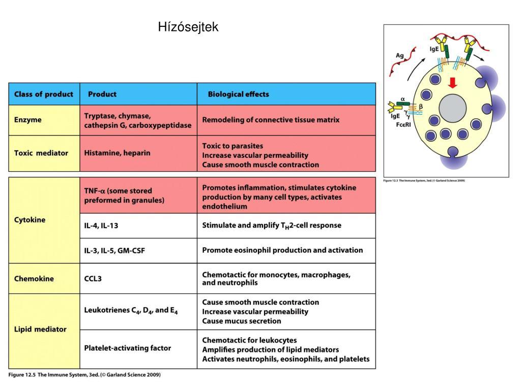 7. Veleszuletett gvk-egyesulet.hu Paraziták elleni immunválasz ppt