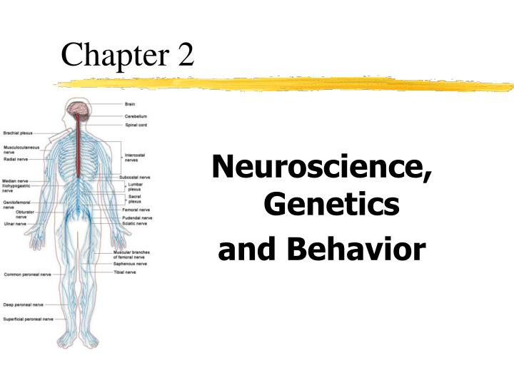 genetics brain structure and behavior presentation evaluation In the abnormal psychology live presentation, dr barlow explains that while brain chemicals and drugs impact behavior, it is also true that psychological intervention: impacts brain fucnctoin and structure.