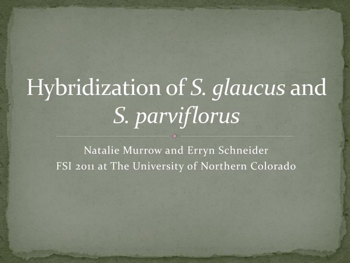 hybridization of s glaucus and s parviflorus n.