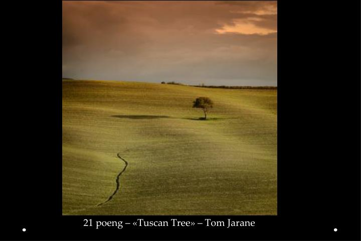 21 poeng – «Tuscan Tree» – Tom Jarane