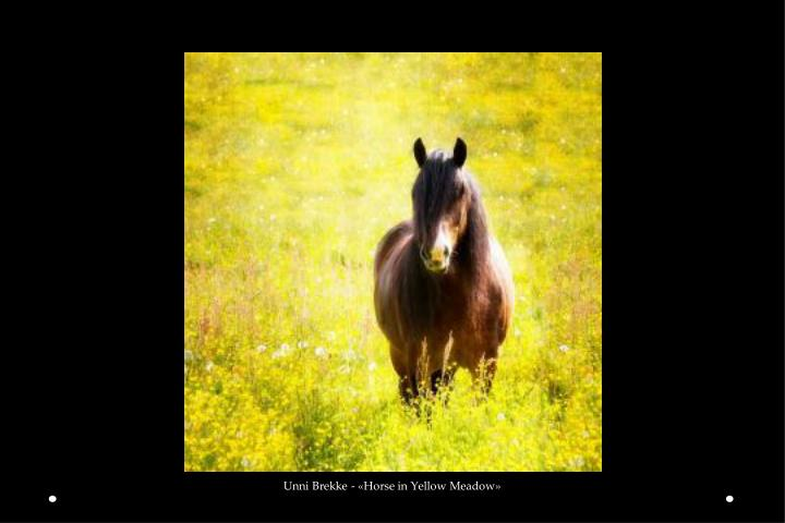Unni Brekke - «Horse in Yellow Meadow»