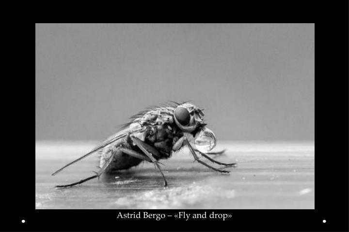 Astrid Bergo – «Fly and drop»