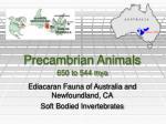precambrian animals 650 to 544 mya