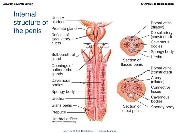 Internal structure of
