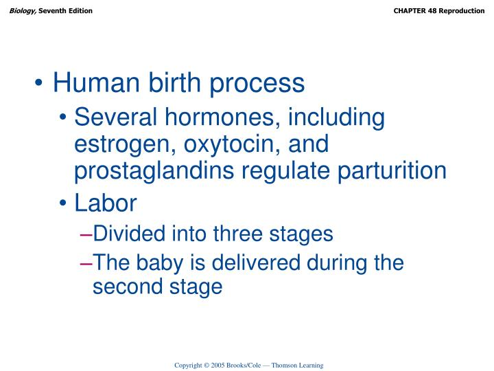 Human birth process