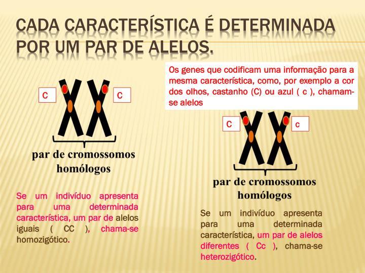 Cada característica é determinada por um par de alelos.