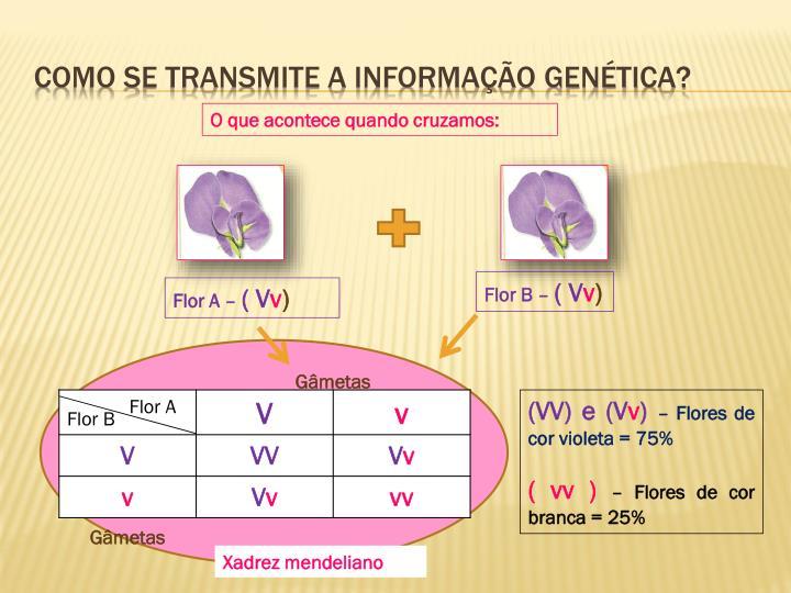 Como se transmite a informação genética?