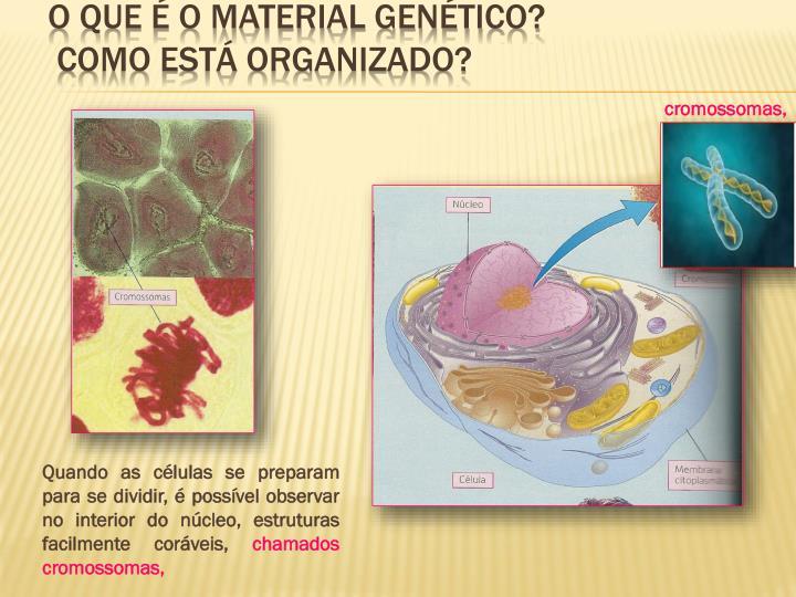 O que é o material genético?