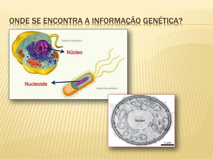 Onde se encontra a informação genética?