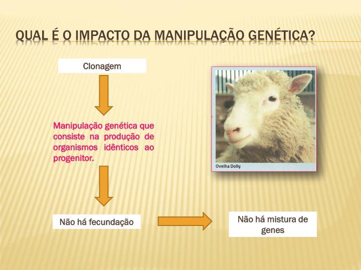 Qual é o impacto da manipulação genética?