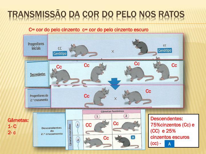 Transmissão da cor do pelo nos ratos