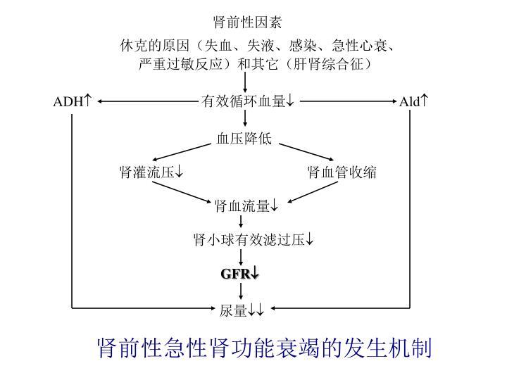 肾前性急性肾功能衰竭的发生机制