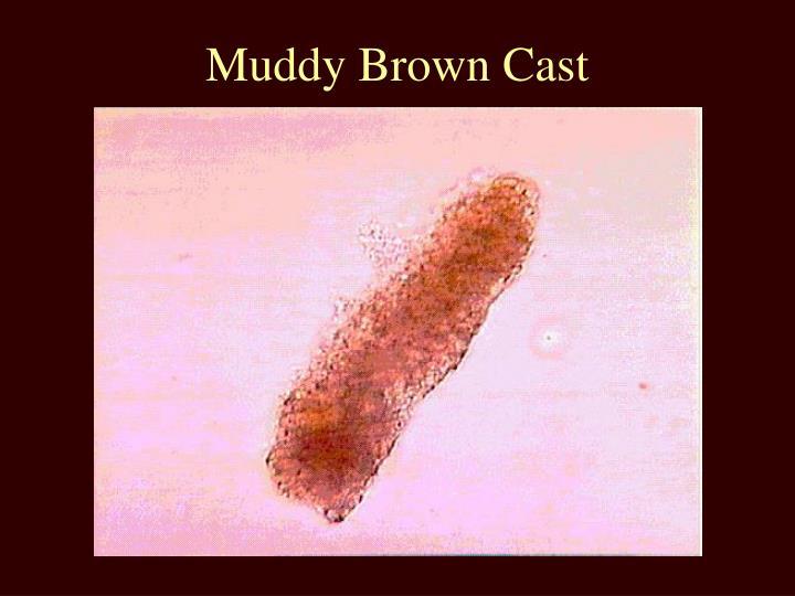 Muddy Brown Cast