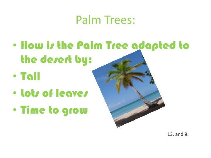 Palm Trees: