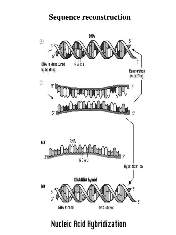 Sequence reconstruction