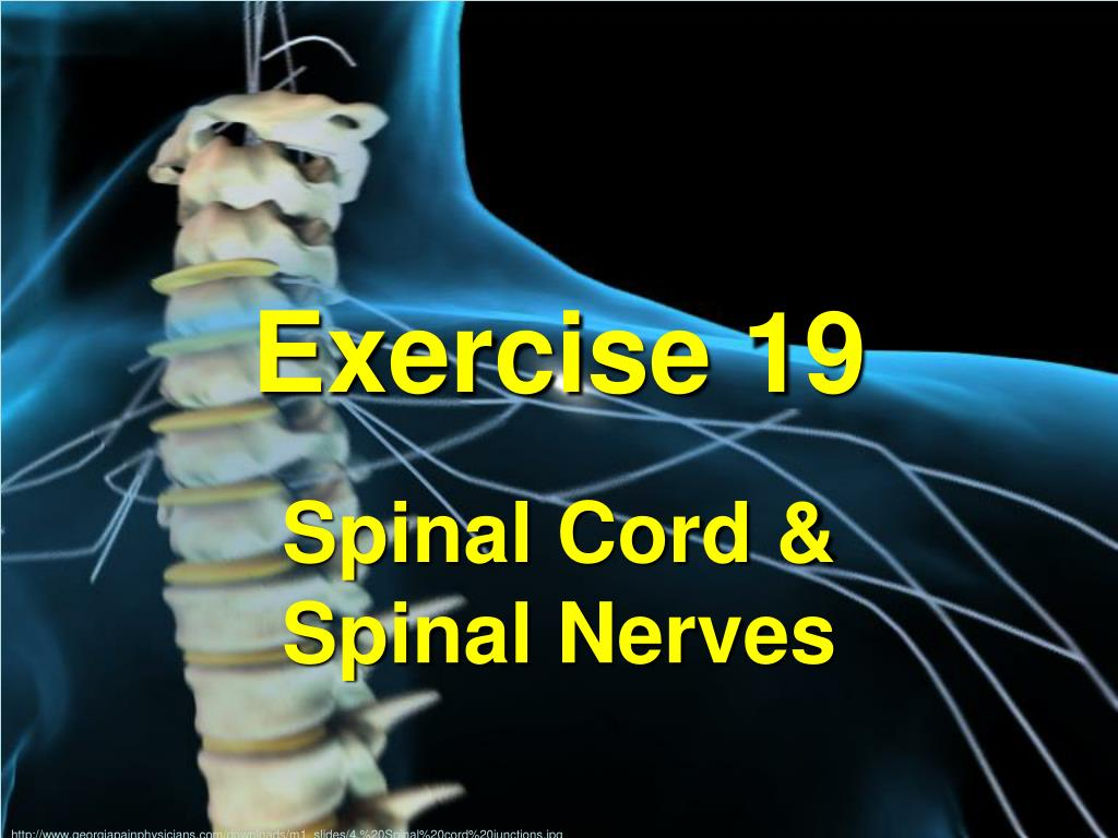 PPT - Exercise 19 PowerPoint Presentation - ID:6084979