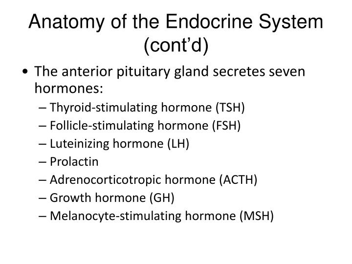 Anatomy of the Endocrine System (cont'd)