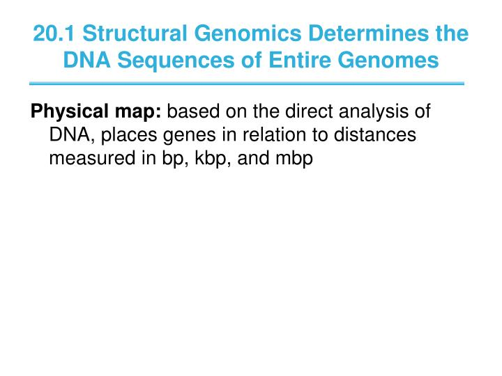 20 1 structural genomics determines the dna sequences of entire genomes1
