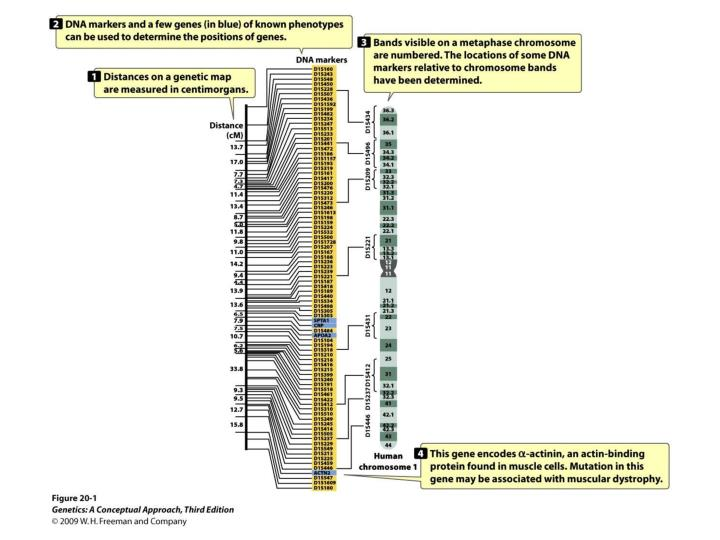 20 1 structural genomics determines the dna sequences of entire genomes