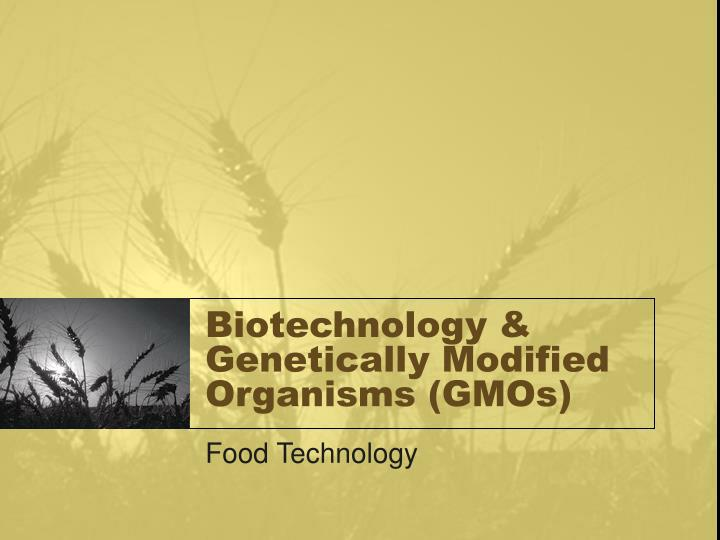 biotechnology genetically modified organisms essay Persuasive essay april a genetically modified organism is a new version of a plant or animal that is created by altering genes using biotechnology.