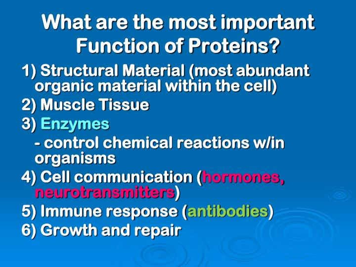 What are the most important Function of Proteins?