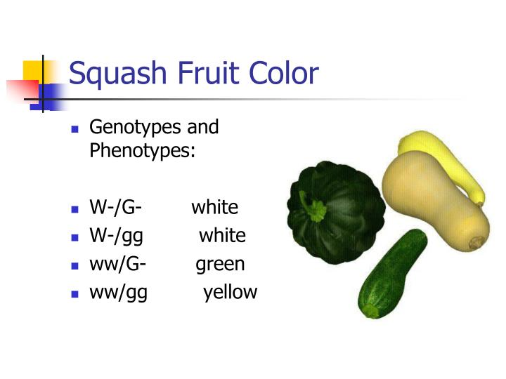 Squash Fruit Color