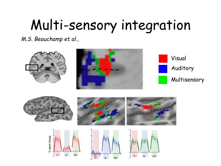 Multi-sensory integration