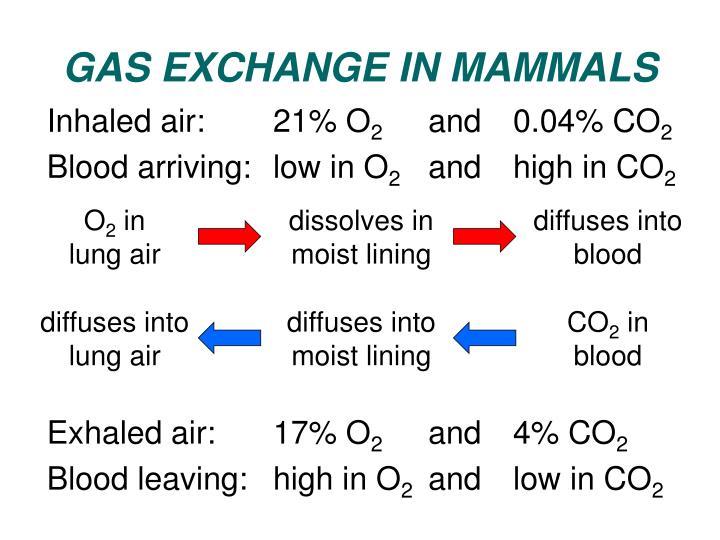 GAS EXCHANGE IN MAMMALS
