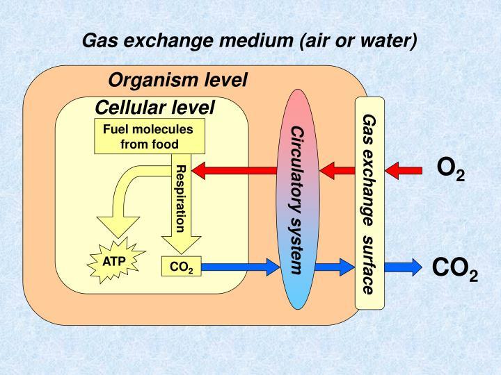 Organism level