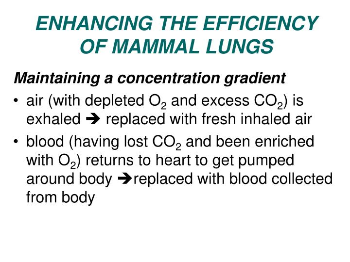 ENHANCING THE EFFICIENCY OF MAMMAL LUNGS