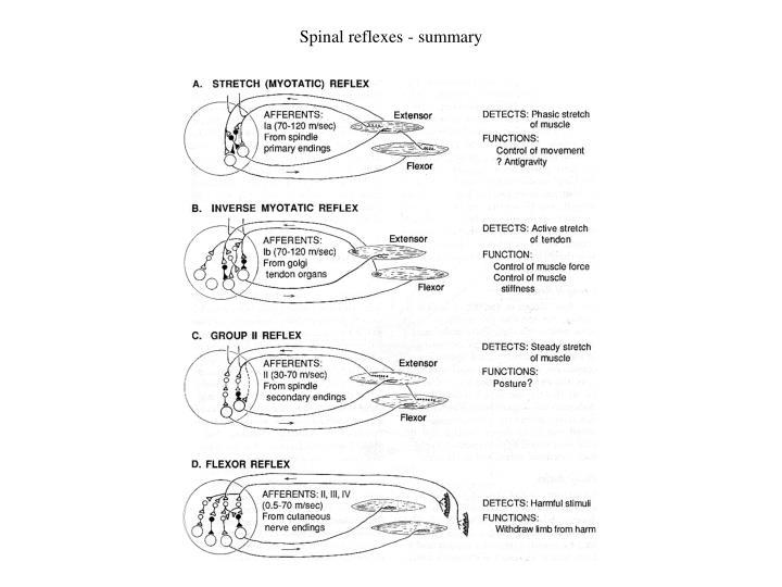 Spinal reflexes - summary